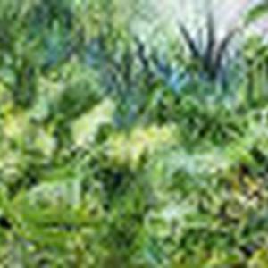 SELVATICO (dodici) - Foresta. Pittura Natura Animale