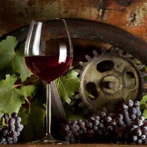 Territori del vino e del gusto