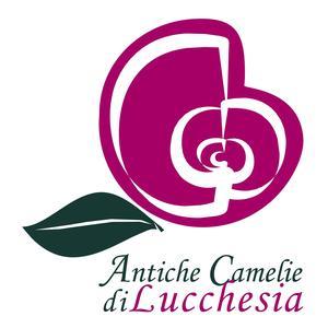 Mostra Antiche Camelie della Lucchesia